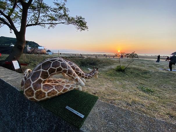 夕日を見つめるキリン父母ヶ浜
