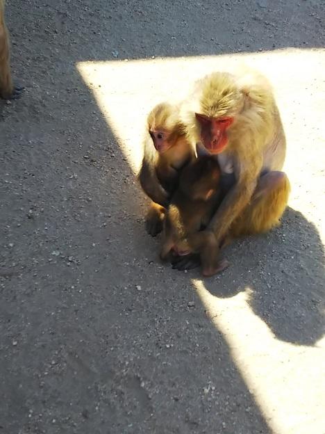 お猿の国のサル