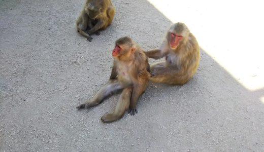 小豆島銚子渓 自然動物園 お猿の国 野生のサルと出会える