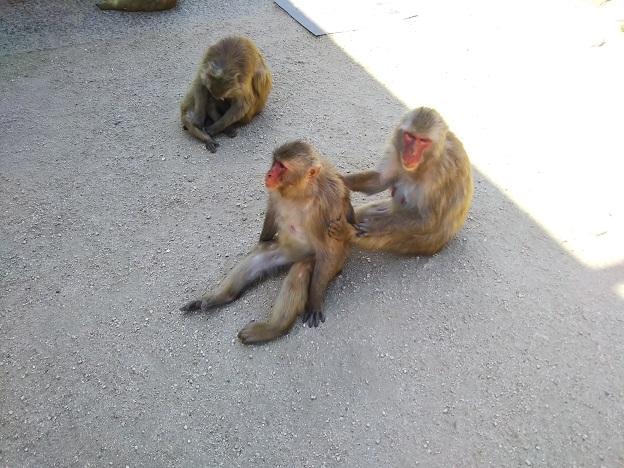 小豆島銚子渓お猿の国