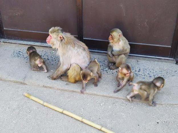 お猿の国 子ザルたち