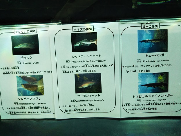 熱帯大水槽の魚2
