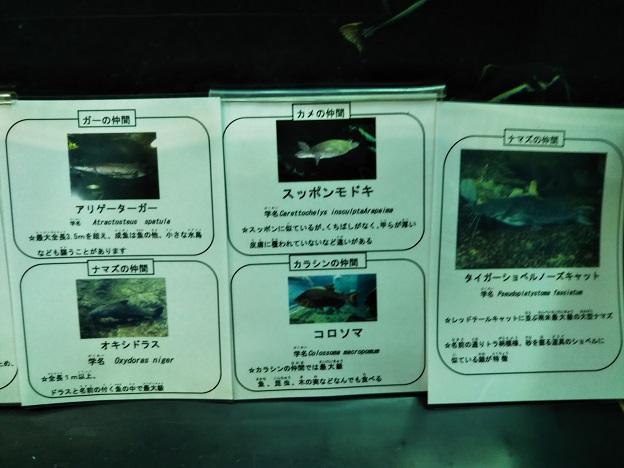 熱帯大水槽の魚1
