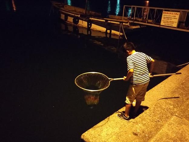 小魚を網ですくう