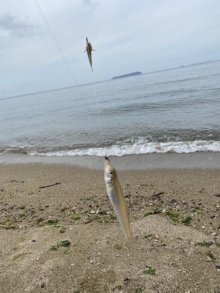 有明浜ふれあい海岸でキスを釣った