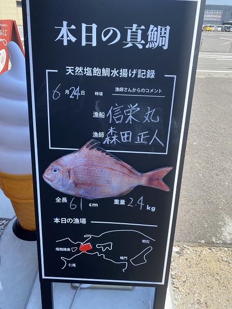 SETOUCHIたいにんぐ 本日の鯛