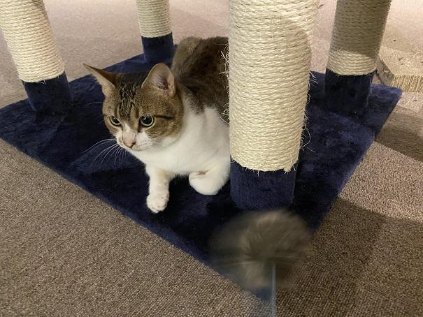 保護猫カフェcat loaf(キャットローフ) ネコ1