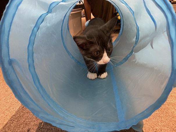 保護猫カフェcat loaf(キャットローフ) ねこ11