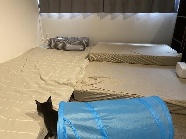 保護猫カフェcat loaf(キャットローフ) 3階寝転ぶ