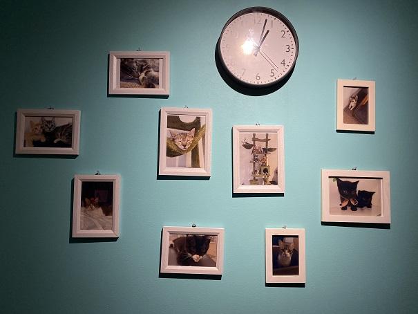 保護猫カフェcat loaf(キャットローフ) 猫写真