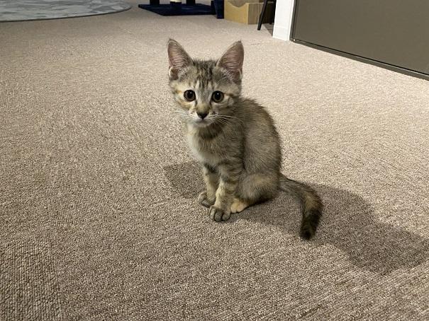 保護猫カフェcat loaf(キャットローフ) ネコ2