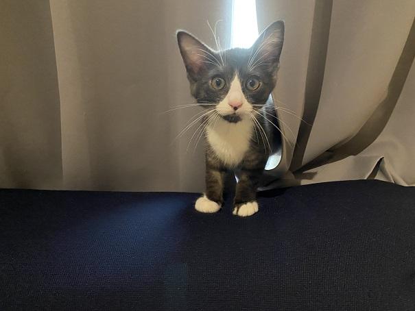 保護猫カフェcat loaf(キャットローフ) ネコ4
