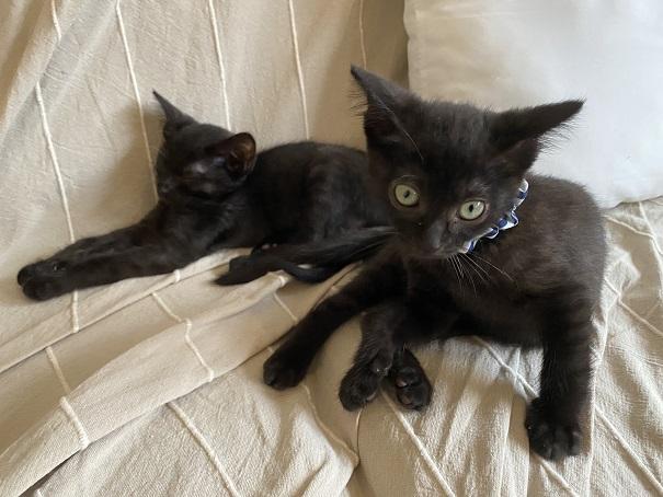 保護猫カフェcat loaf(キャットローフ) ネコ12
