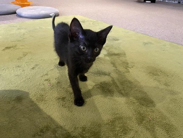 保護猫カフェcat loaf(キャットローフ) ネコ13