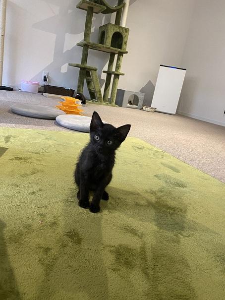 保護猫カフェcat loaf(キャットローフ) ネコ14