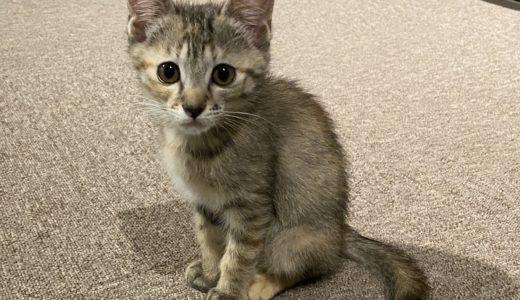 保護猫カフェcat loaf(キャットローフ)子猫ちゃんと触れ合って癒される 高松市
