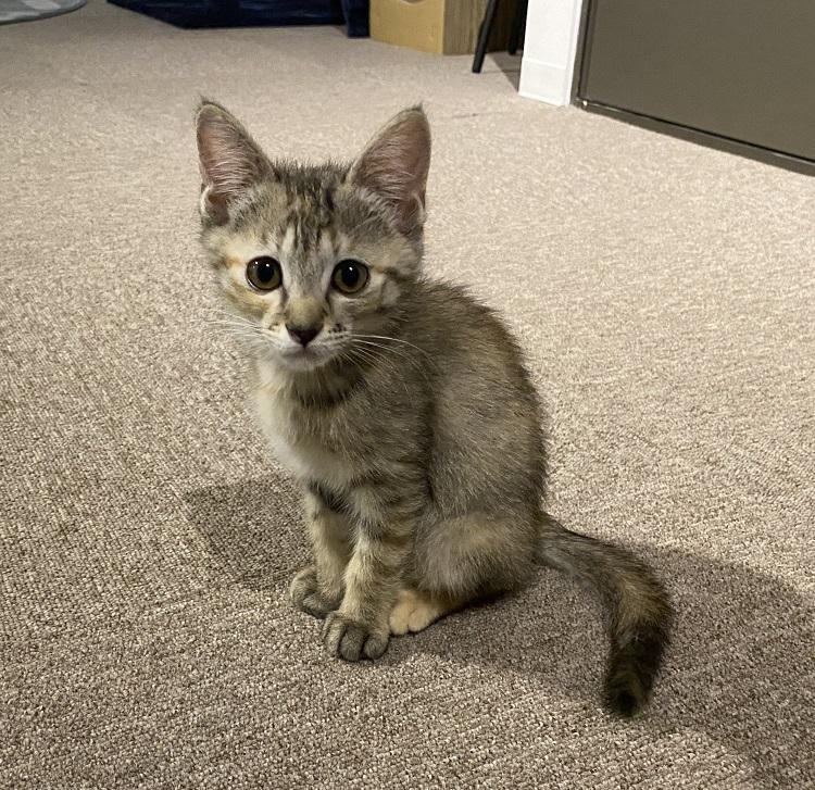 保護猫カフェcat loaf