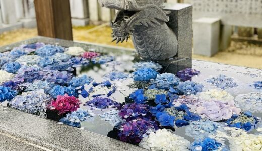 粟井神社 3000株の紫陽花が咲くあじさいの宮と祭 観音寺市