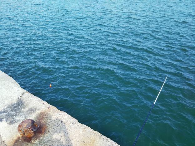 サビキの浮き釣り