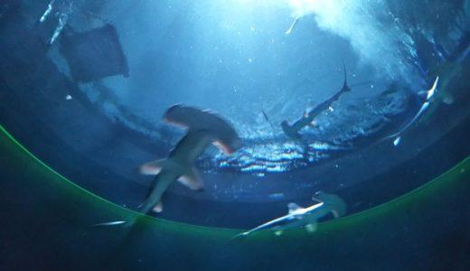 四国のおすすめ水族館とお魚と触れ合えるスポット