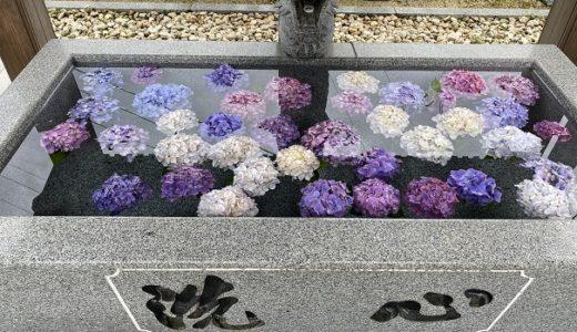 粟井神社 3000株の紫陽花が咲くあじさいの宮 観音寺市