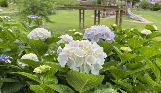 善通寺五岳の里・市民集いの丘公園 四季折々のお花が楽しめる公園