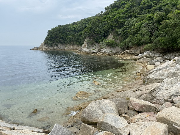海釣り公園跡地藻場