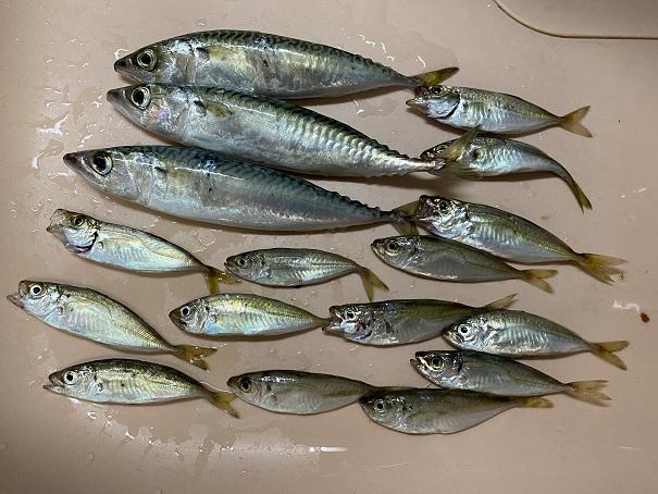 馬篠漁港釣果