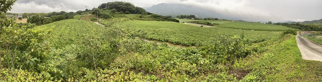 中山ひまわり団地パノラマ写真