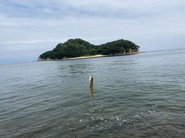 山田海岸釣れたキス