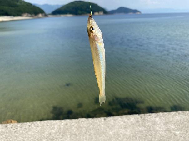 名部戸海水浴場釣れたキス