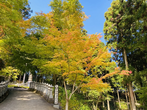 雲辺寺境内の秋の紅葉
