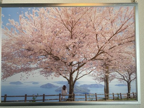 紫雲出山 桜3