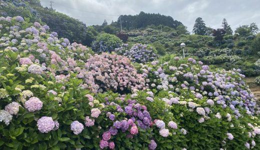 あじさいの里 新宮 見ごたえある2万株の紫陽花 四国中央市