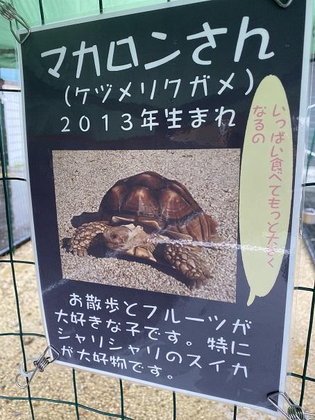 animal cafe Haru-Haru Farm (アニマルカフェ ハル-ハル ファーム)マカロンちゃん