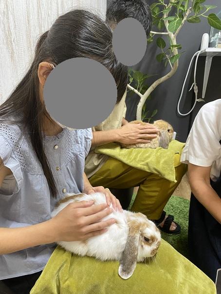 animal cafe Haru-Haru Farm (アニマルカフェ ハル-ハル ファーム)うさぎ