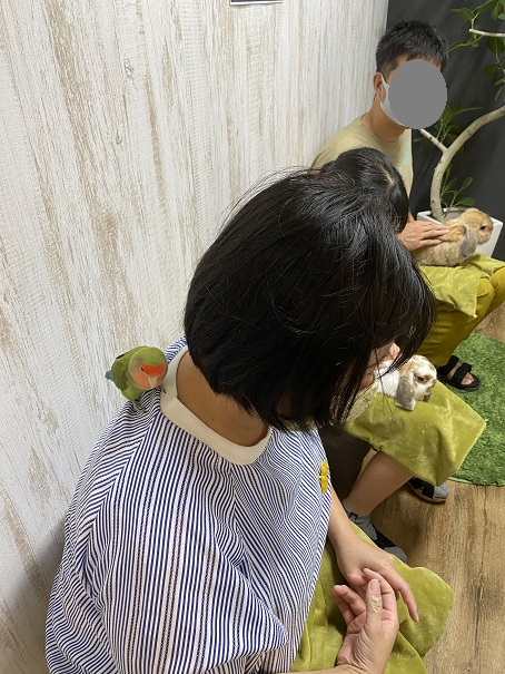 animal cafe Haru-Haru Farm (アニマルカフェ ハル-ハル ファーム)インコ