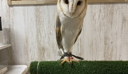 animal cafe Haru-Haru Farm (アニマルカフェ ハル-ハル ファーム)フクロウやハリネズミと触れ合えるcafe 善通寺市