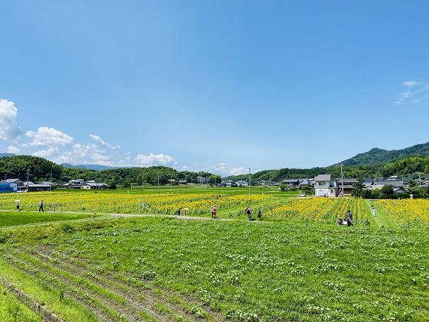 帆山ひまわり団地展望台景色
