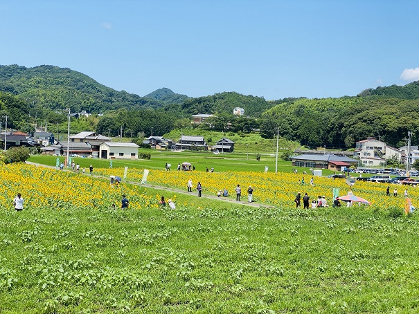 帆山ひまわり団地特設展望台からの風景