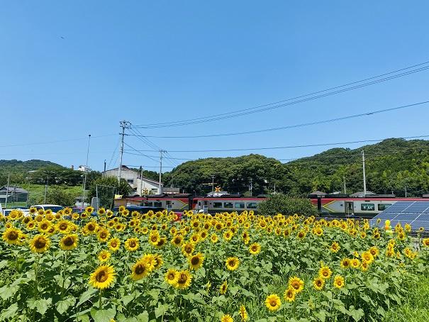 帆山ひまわり団地電車や列車