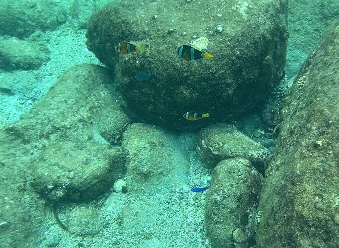柏島 シュノーケリング 熱帯魚