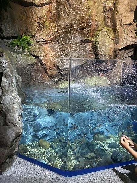 新・足摺海洋館SATOUMI 足摺の原生林大水槽