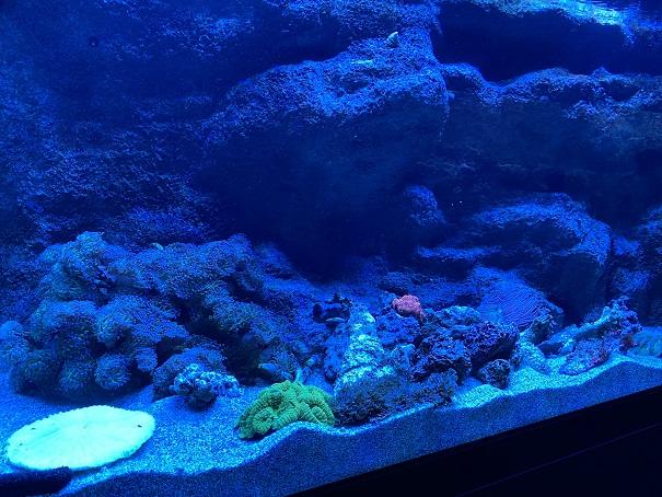 新・足摺海洋館 サンゴ2