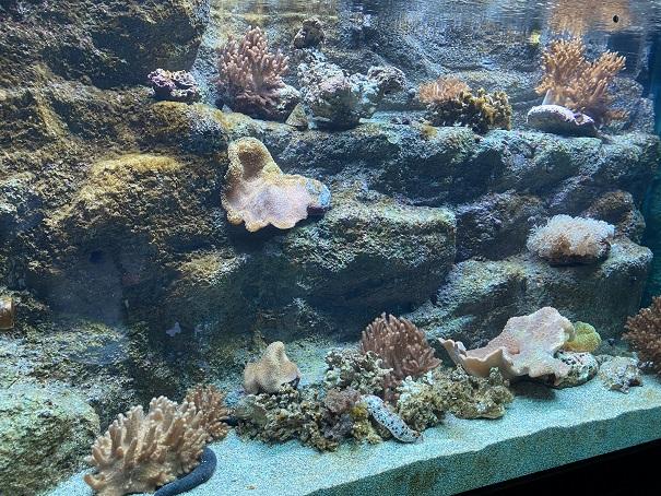 新・足摺海洋館 サンゴ3