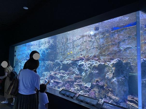 新・足摺海洋館 サンゴ4