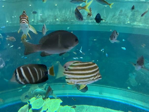 新・足摺海洋館 竜串湾大水槽1