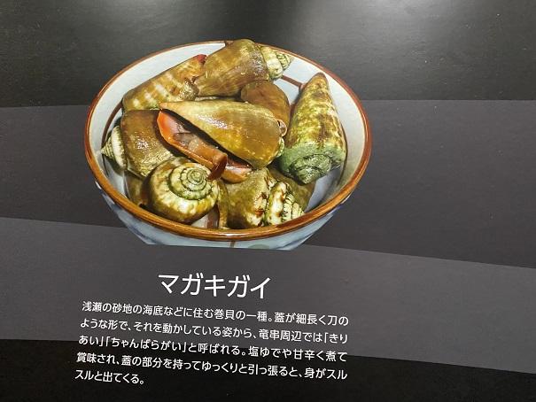新・足摺海洋館SATOUMI マガキガイ
