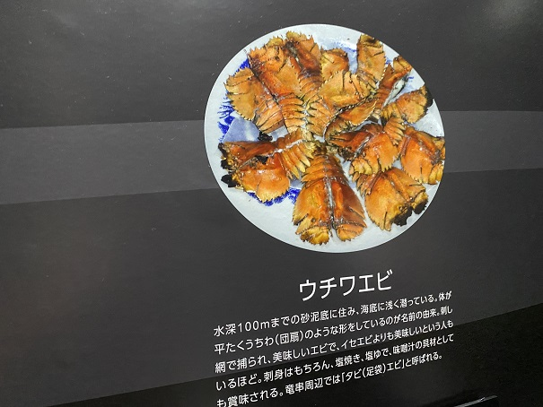 新・足摺海洋館SATOUMI ウチワエビ