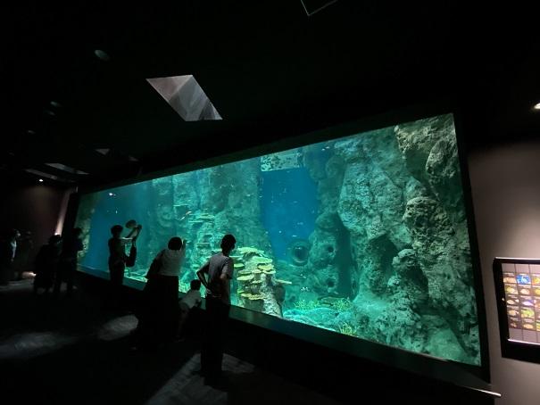 新・足摺海洋館SATOUMI 竜串湾大水槽